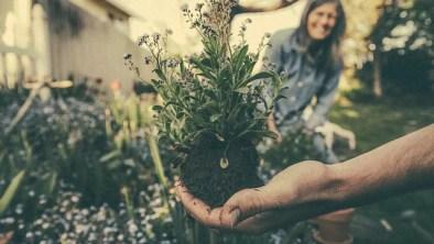 The Glory of Gardening