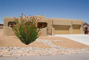 The Ocotillo Plant