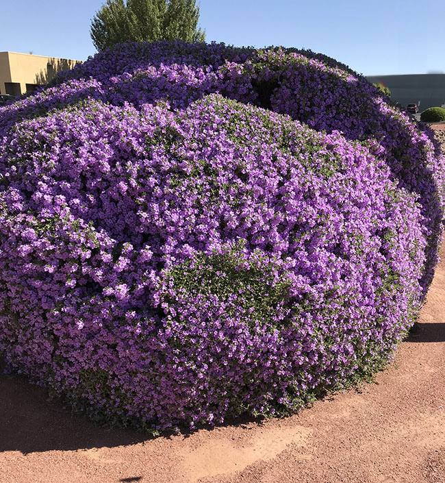 Evergreen Shrubs in the Southwest