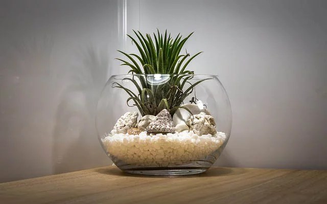 Air Plants Care Guide