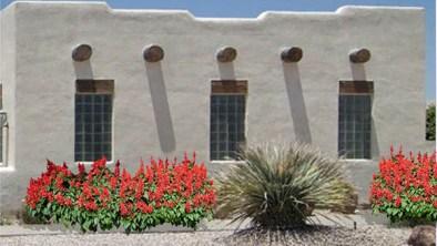 Salvia plant care