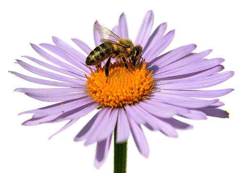 Plants that are attracted to bees