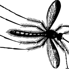 How to eliminate fungus gnats from your houseplants