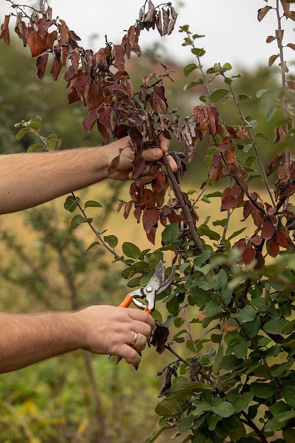 How to Avoid Fungal Diseases on trees and plants