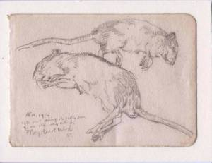 David Jones, 'Rats' (pencil sketch)