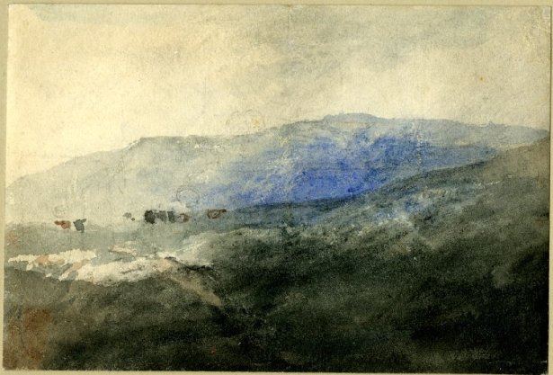Cotman Cattle on a mountain, north Wales