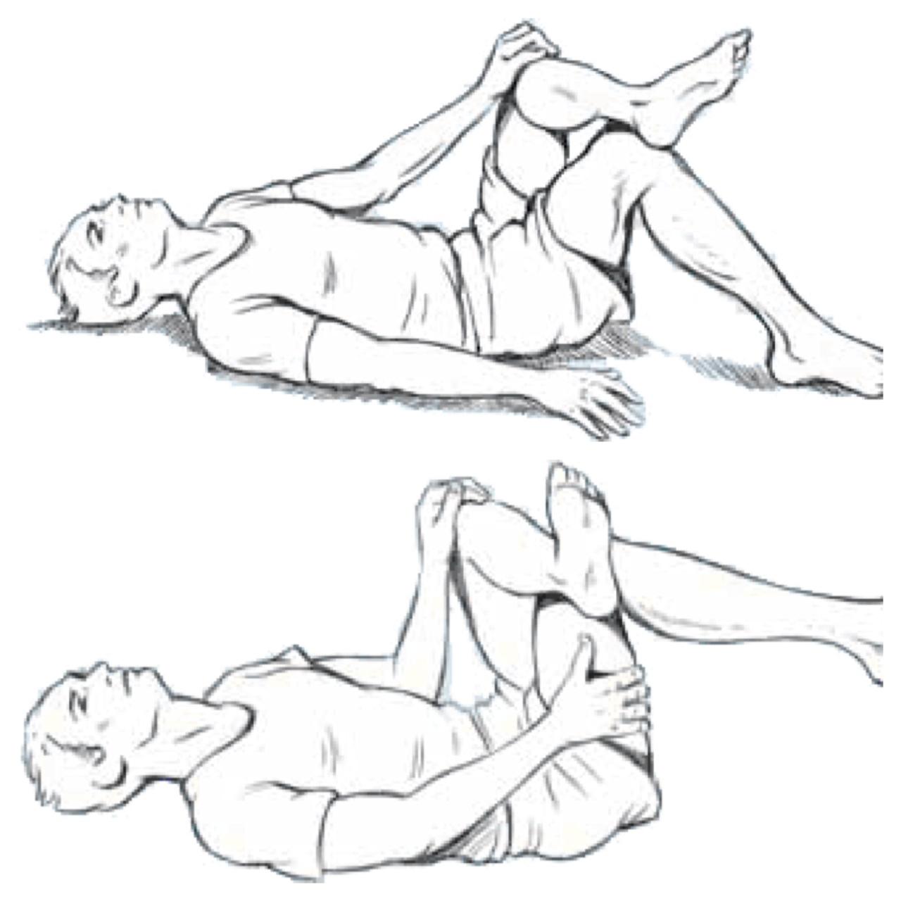 Piriformis Muscle Lower Back Anatomy Diagram