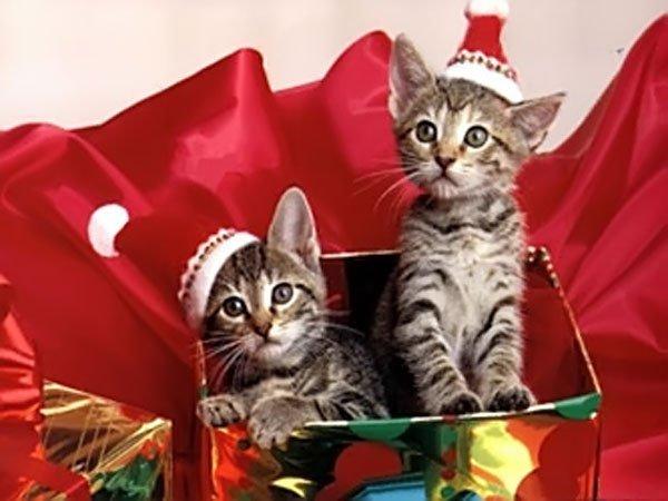 gwendalperrin.net noel cadeau chats