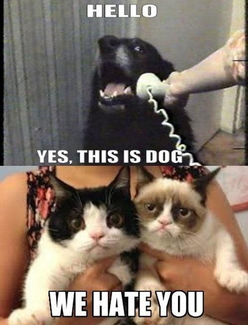 gwendalperrin.net this is dog grumpy cat