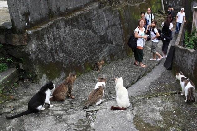 gwendalperrin.net houtong taiwan cat