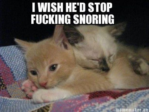 gwendalperrin.net cat snore