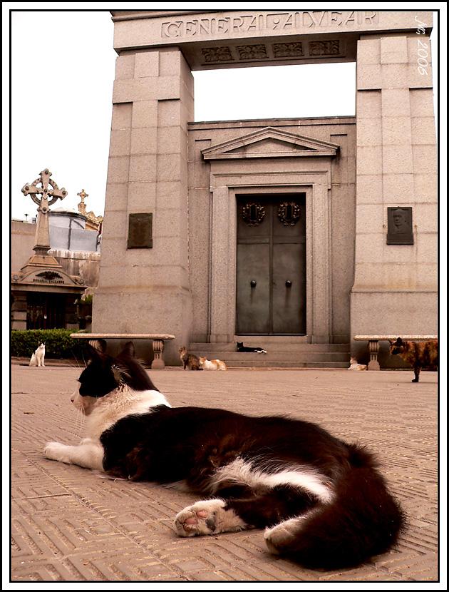 gwendalperrin.net cementerio de la recoleta lobby félin argentine (2)