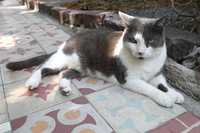 gwendalperrin.net lobby félin hemingway home cats chat key west (1)