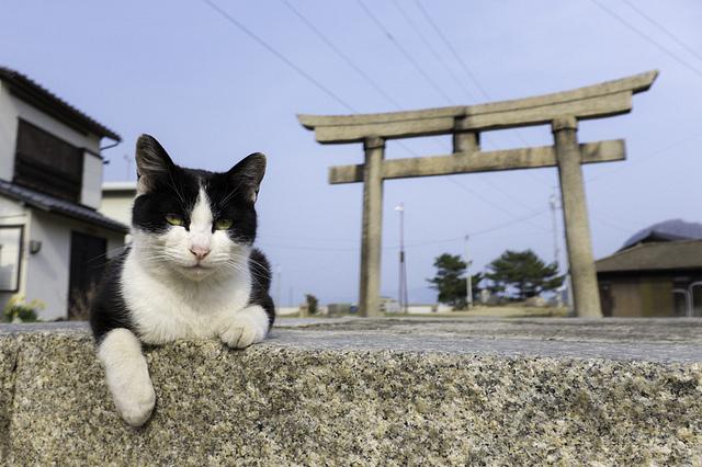 gwendalperrin.net lobby félin japon sanagishima