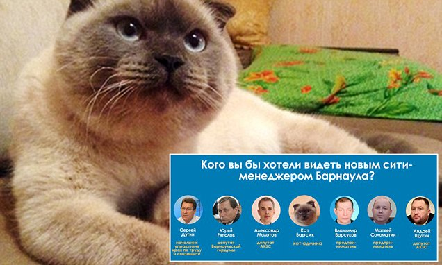 "Pic shows: Barsik.nnThe feline contender called Barsik was put on to the ticket via the Russian social media website Vkontakte.nnAn online poll ahead of the election proper was supposed to find the new mayor for the city of Barnaul in south-central Russia.nnBarsik was listed among the real potential candidates for the post by a local Internet group.nnMore than two thousands people took part in the poll, with the fluffy candidate winning by a large margin against the fellow candidates.nnAlmost 90% of more than 2000 people, who participated in the poll, cast their votes for the four-legged candidate.nnA lot of people commented their decision with such slogans as ""Go, Barsik"" and ""Barsik rules"".nnUser Aleksandr Reshetnikov commented that the reason Barsik leads the poll is because people believe that he would do the job better than the rest of the candidates.nnCurrently Petr Frisen is in charge of the city, after his predecessor Igor Savintsev was fired from the position for corruption.nn(ends)nn"