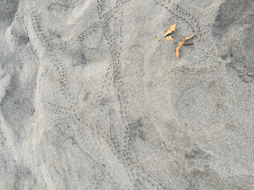 crab tracks in the sand