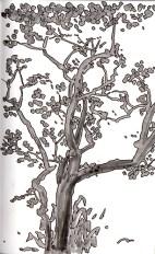 Carob Tree Como Conservatory
