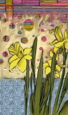 Daffodil studies 2
