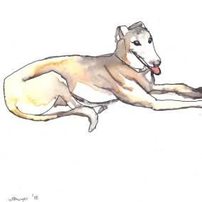 Greyhound 1