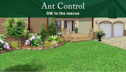 Ant Control Indoor and Outdoor