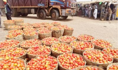 Prices Tomatoes Vegetables Kano