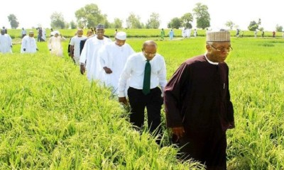 Emefiele Agriculture
