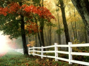 fence-autumn