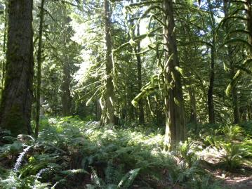 Literal - Forest