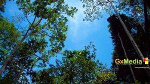 The sky above the Kamuni Creek in Demerara.