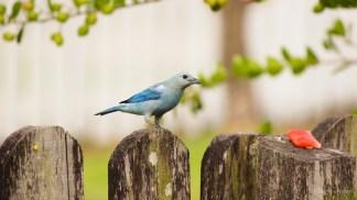 Blue Bird!