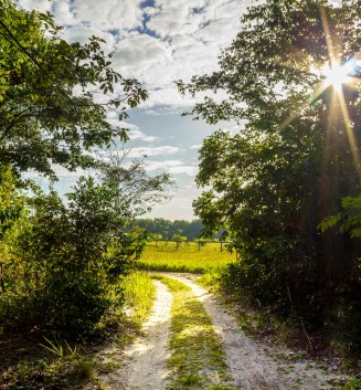 Morning trail