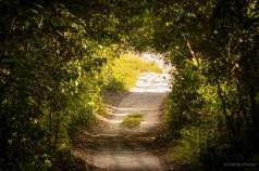 Path of glory