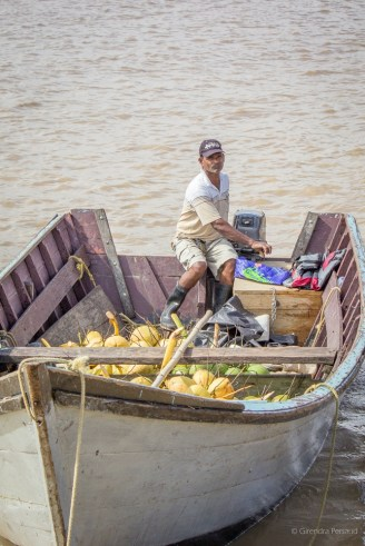 Fresh coconuts from Bonasika