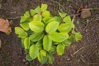 Young bush