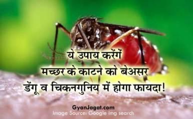 ये उपाय करेंगें मच्छर के काटने को बेअसर डेंगू व चिकनगुनिय में होगा फायदा!