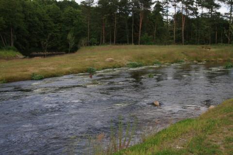 Sportsfiskerhus_aaenRanunkulus