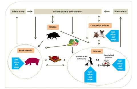 Antibiotika_smitteveje