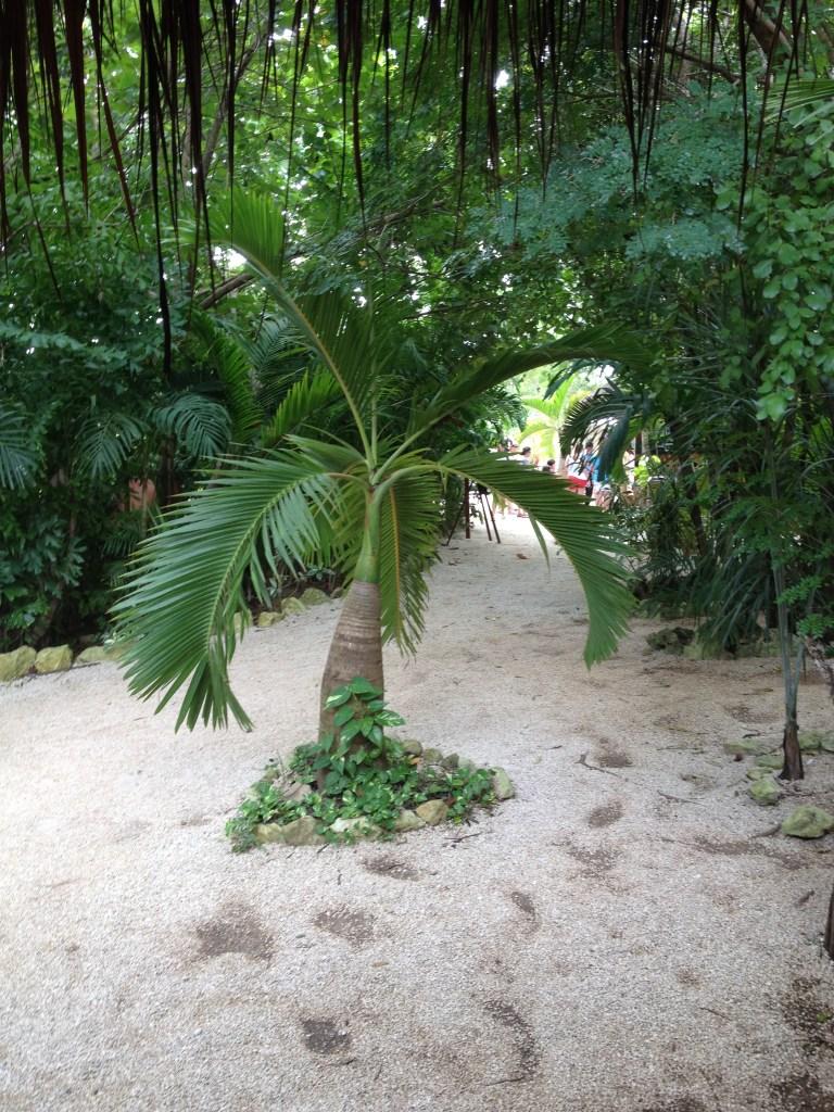 palm vid ingången