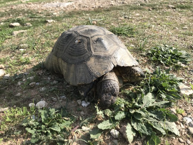 sköldpadda foto gyllintours