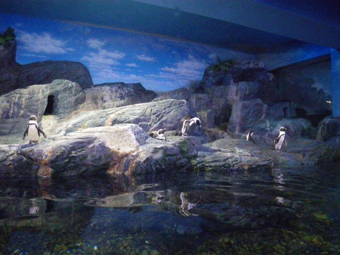 pingviner på ocean word