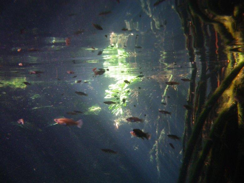 fish in cenote