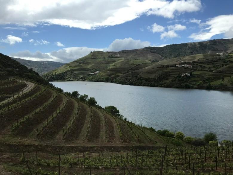 vinodlingar i Dourodalen
