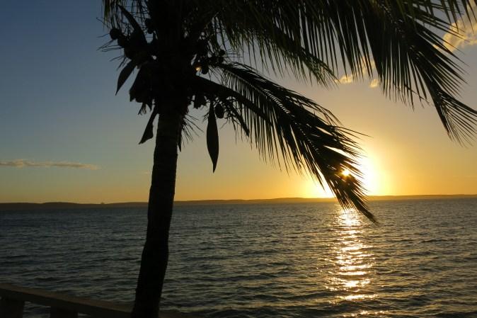 palmtree in sunset