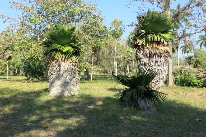 palmtree in park
