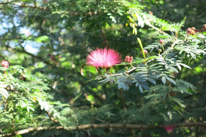 pink flower in the park