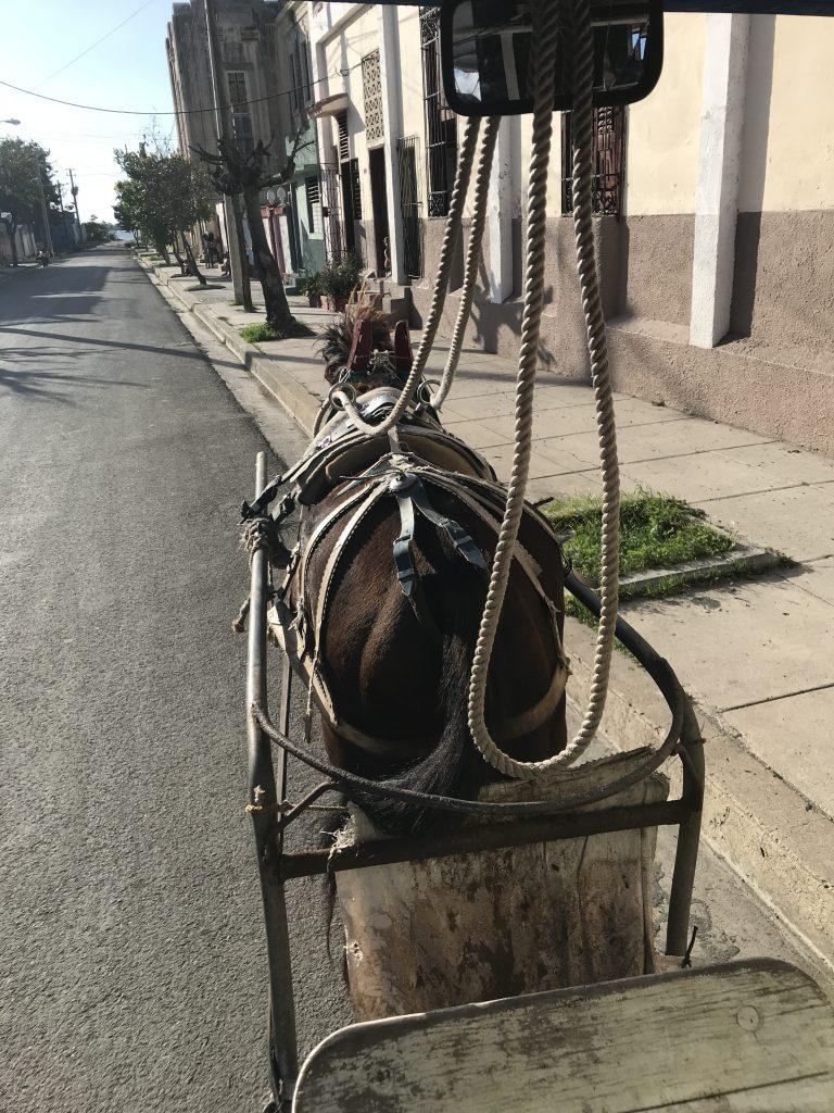häst utan kusk