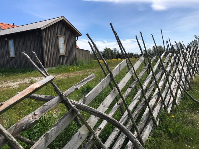 tuga och ett gotländskt staket