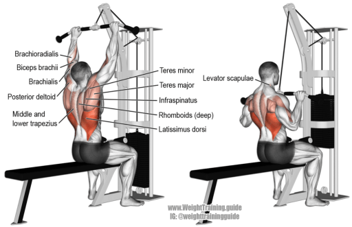 the best lat exercises
