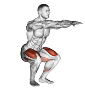 squats-quads exercises