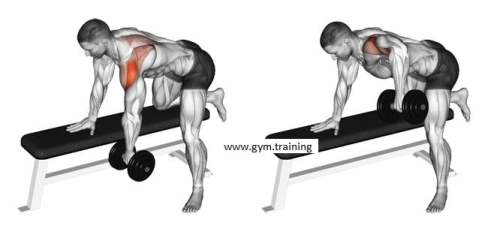 dumbbell back exercises